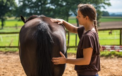 Een paard revalideren – hoe, wat en wanneer?