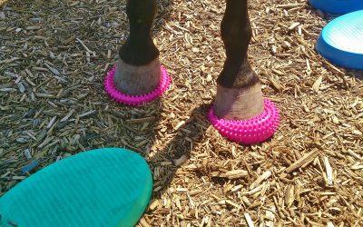 Balanskussens: body-awareness voor je paard
