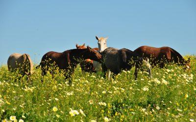 De basisvoorwaarden van je paard: voeding en vrije beweging