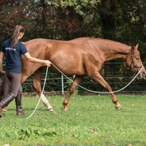longeren, paard lichaamstaal