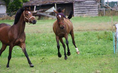 Wat doet vrije beweging voor je paard?